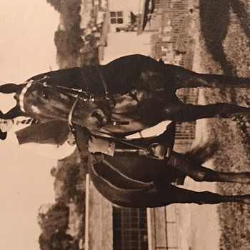 Old Kentucky Horse Picture - Photographs