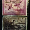 2- Duck Stamps Appear to be Signed by Artist ? Unknown too Me. Need Help !