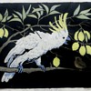 Orig. Lino-cut by Australian Artist Ursula Ridley Walker~of Cockatoo, Bird, &amp; Lemons