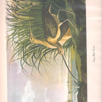 Audubon Prints