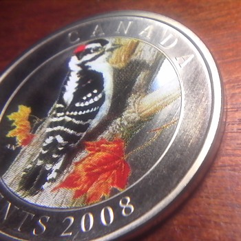 Downy Woodpecker Coin