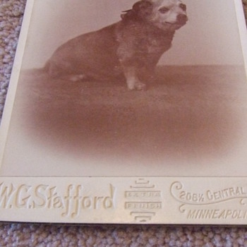 Cabinet card of an overweight dog