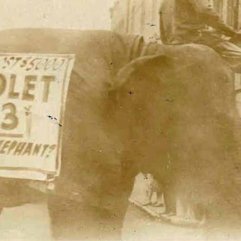 CHEVROLET ELEPHANT! - Photographs