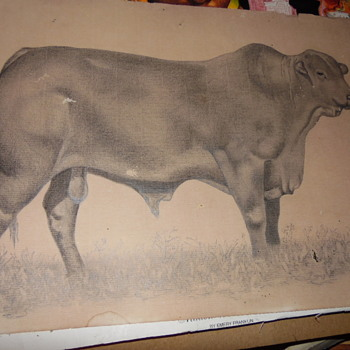 "Antique Pencil Drawing Of Large Bull Signed ""M or R Rossi - Visual Art"