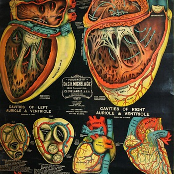 Heart Anatomy - 1890s - Posters and Prints