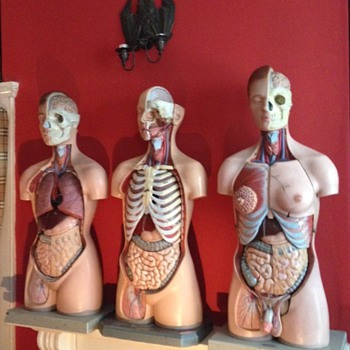 vintage anatomical models Adam,Rouilly