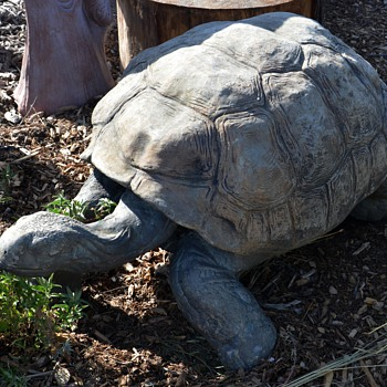 Ginormous Tortoise! - Animals