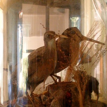 Antique Victorian Large Glass Dome Taxidermy Birds Sandpipers