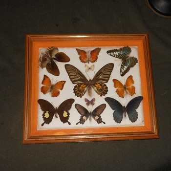 Still Yet Another Butterfly Collection Featuring a Big Moth