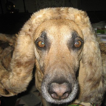 RIP sweet old chap TANGO. - Animals