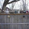 the bird houses