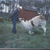 My Canada family training llama's ! Farm