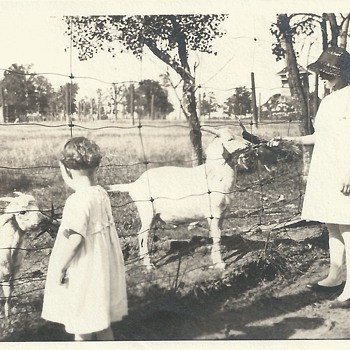 "Nieces Fieding the Goats at the Farm""Late XIX Century"" - Photographs"
