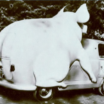 Unique Advertising Vehicle  - Animals