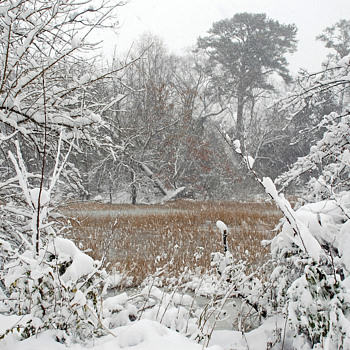 """ Images of Winter"" in Suffolk, Virginia"