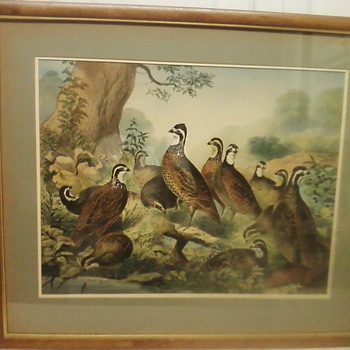 A BEVY OF QUAILS LITHOGRAPH