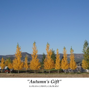 """AUTUMN'S GIFT"":  LA PLATA COUNTY, COLORADO - Photographs"