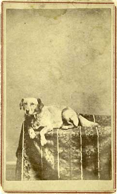 Scarce CDV of Lincoln's Dog Fido; $2800
