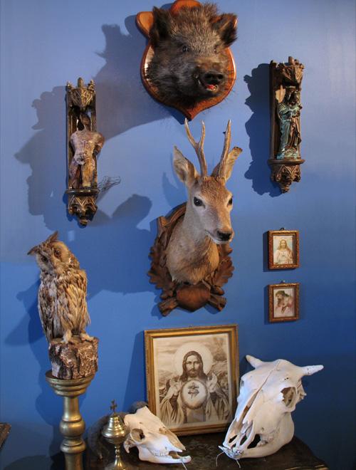 Trophies displayed at Debaillie's apartment. Image via Ravishing Beasts.