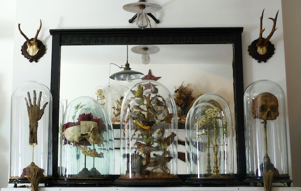 """In his living room, Cohn keeps this """"Mantel of Domes"""" with taxidermied birds, skulls, and a mummified hand in Victorian-style bell jars to evoke the wonder of a science museum. Photo by Sergio Royzen."""