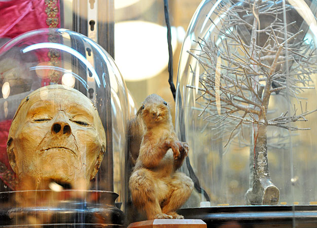 mummies and monkey skulls oddities host matthew cohn on creepy antiques collectors weekly
