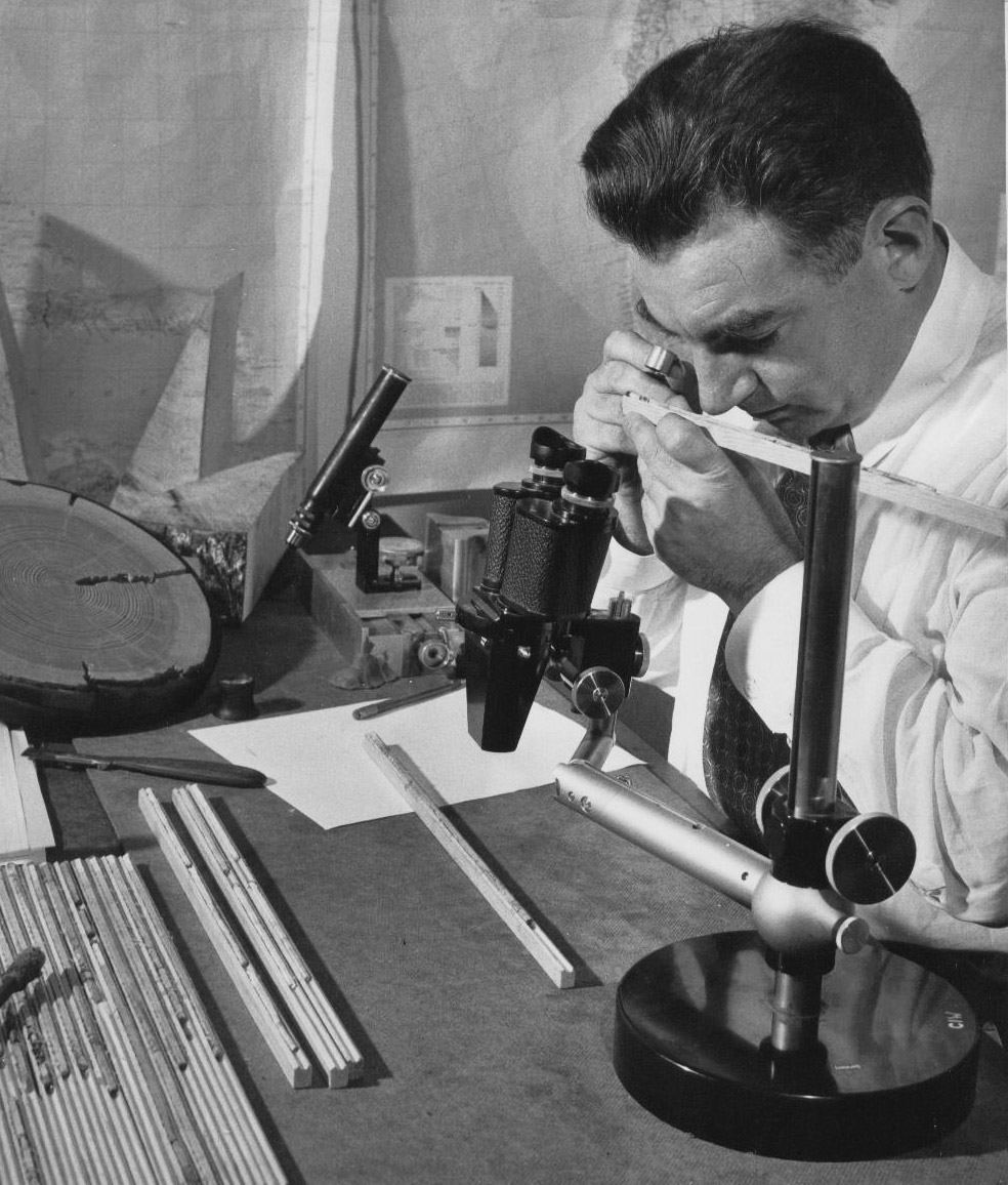 Top: A deceased Great Basin bristlecone pine. Photo by Nick Turland. Above: Dr. Edward Schulman, the first to study bristlecone pines, analyzing a core sample.Courtesy of Laboratory of Tree-Ring Research, The University ofArizona.