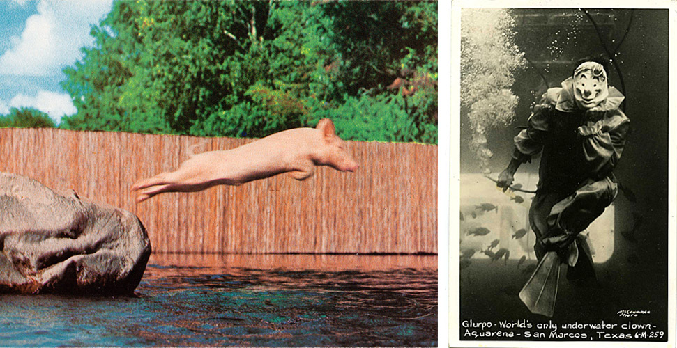 "Left, Ralph captured mid-""Swine Dive."" Right, an early shot of Aquarena's clown, Glurpo."