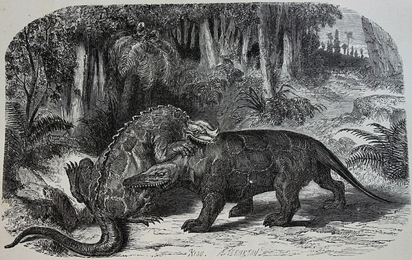 In the early 19th century, paleontologists mistakenly put a thumb spike on the end of the Iguanodon's nose (left), an error that persisted well into the middle of the century, when Edouard Riou did this etching of an Iguanodon fighting a Megalosaurus. Photo via Wikipedia.