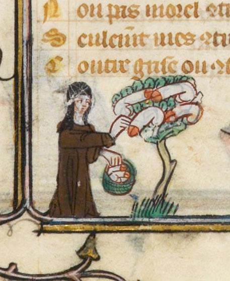 phallus-tree.jpg