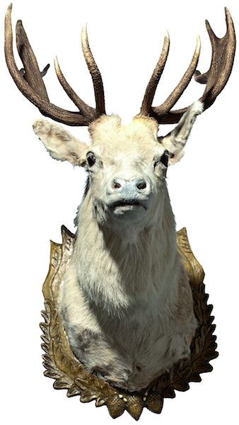 Mantique-edit_trophy deer Bohemia