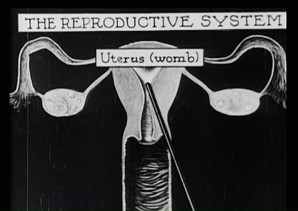"A depiction of the female reproduction system in ""The Science of Life,"" one of the first ""plumbing movies."" (Still from ""Sex(Ed): The Movie"")"