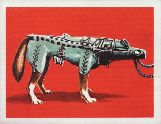 "The text (in French and Dutch) on the reverse of this 1964 Jacques chocolate card, ""Assault on the Stars,"" explains how dog astronauts helped man explore the physical effects of space flight. (© FUEL Publishing / Marianne Van den Lemmer)"