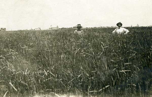 Before Prohibition, rye grew at least as far west as Stratton, Colorado, as shown in this 1915 photo.