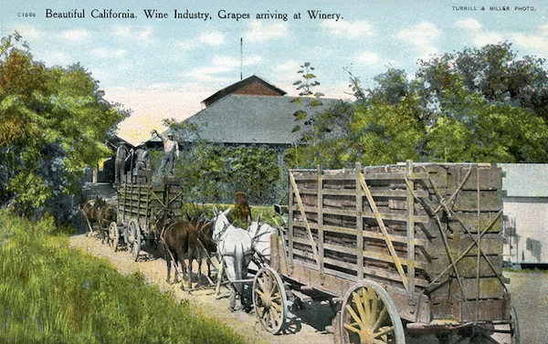 How grapes were brought in from the vineyards for processing in a Napa winery, circa 1905. (Courtesy Early California Wine Trade Archive)