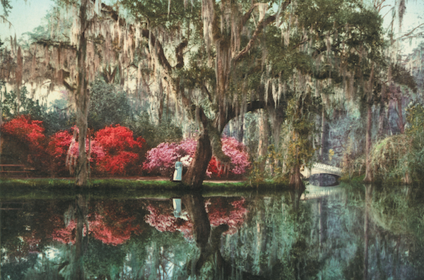 Teich & Co. postcards lack the subtlety of postcards produced by the Detroit Photographic Co., as this quiet view of Charleston's Magnolia gardens shows. Courtesy Marc Walter/Taschen.