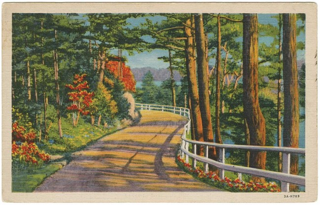Between 1920 and 1930, the number of passenger cars in the United States rose from 8 to 23 million, which may explain why so many postcards of roads were produced by Teich & Co. Courtesy University of Texas Press.