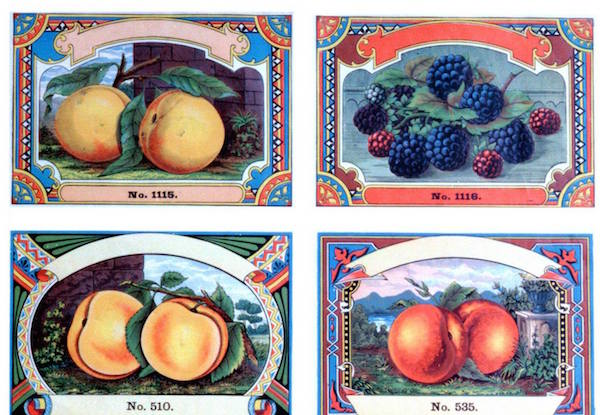 Fruit labels from the original Oneida Community. (From the Oneida Community Mansion House Facebook page)