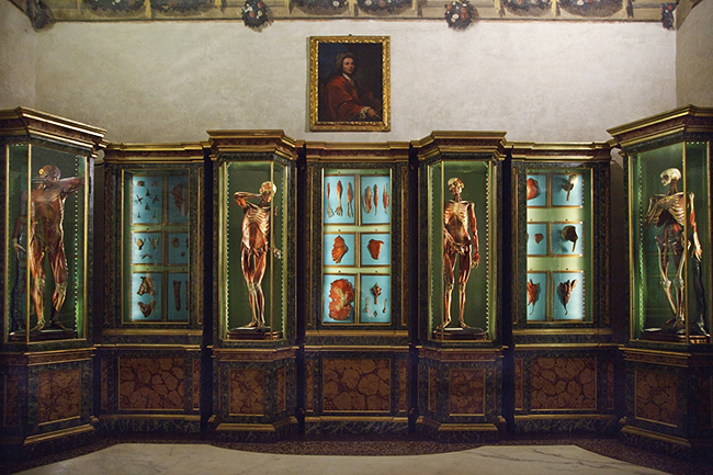 Part of the progression of flayed wax figures in glass vitrines at the Palazzo Poggi in Bologna, Italy. Photo © Joanna Ebenstein.